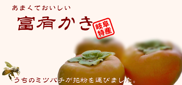 富有柿は岐阜県特産の甘柿。小森養蜂場でもつくっています。