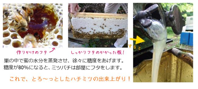 ハチミツを食べるとき、ミツバチのことも思い出してね