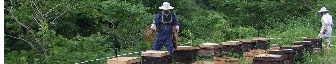 岐阜の山の中でハチミツを採る様子