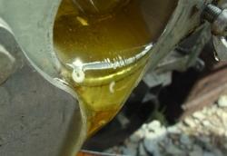 黄色いオオハンゴンソウの蜜