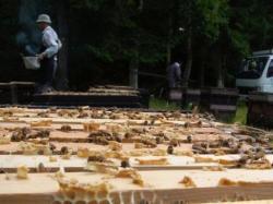 ソバ蜂蜜混じりの百花蜂蜜