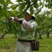 富有柿畑のカヨコさん