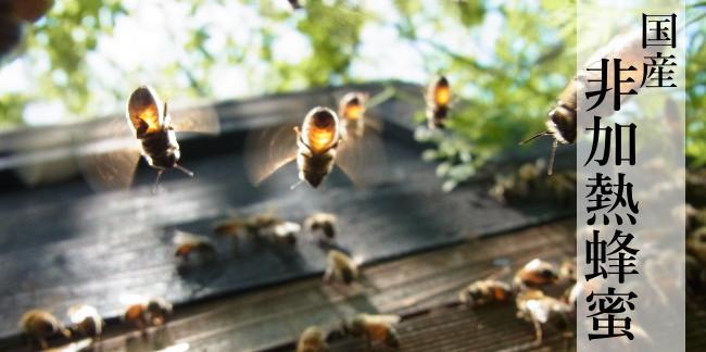 国産非加熱蜂蜜