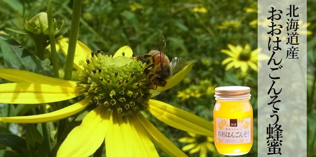 北海道産おおはんごんそう蜂蜜