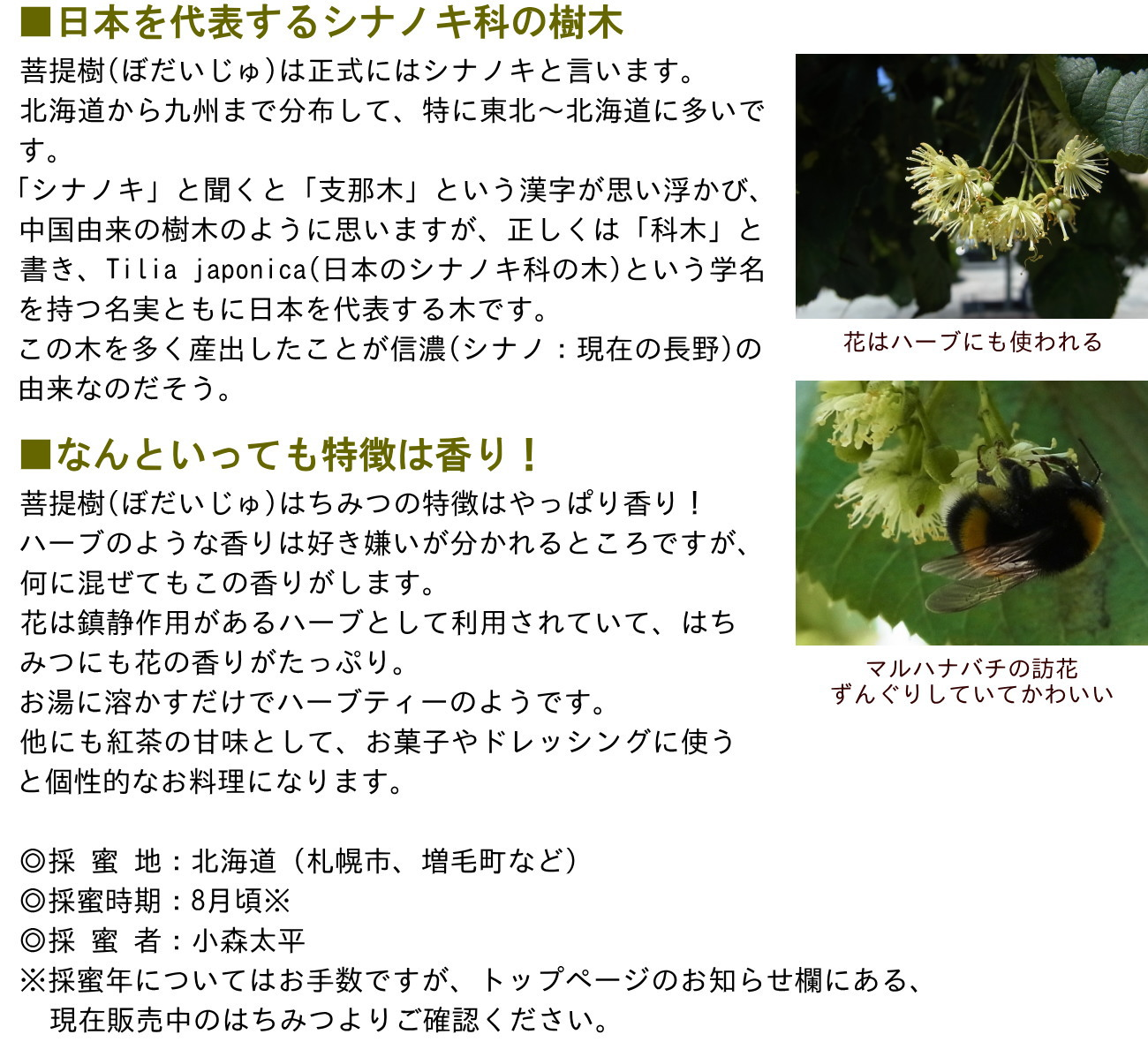 ■日本を代表するシナノキ科の樹木菩提樹(ぼだいじゅ)は正式にはシナノキと言います。北海道から九州まで分布して、特に東北〜北海道に多いです。「シナノキ」と聞くと「支那木」という漢字が思い浮かび、中国由来の樹木のように思いますが、正しくは「科木」と書き、Tilia japonica(日本のシナノキ科の木)という学名を持つ名実ともに日本を代表する木です。この木を多く産出したことが信濃(シナノ:現在の長野)の由来なのだそう。■なんといっても特徴は香り!菩提樹(ぼだいじゅ)はちみつの特徴はやっぱり香り!ハーブのような香りは好き嫌いが分かれるところですが、何に混ぜてもこの香りがします。花は鎮静作用があるハーブとして利用されていて、はちみつにも花の香りがたっぷり。お湯に溶かすだけでハーブティーのようです。他にも紅茶の甘味として、お菓子やドレッシングに使うと個性的なお料理になります。◎採 蜜 地:北海道(札幌市、増毛町など)◎採蜜時期:8月頃※◎採 蜜 者:小森太平※採蜜年についてはお手数ですが、トップページのお知らせ欄にある、 現在販売中のはちみつよりご確認ください。花はハーブにも使われるマルハナバチの訪花ずんぐりしていてかわいい